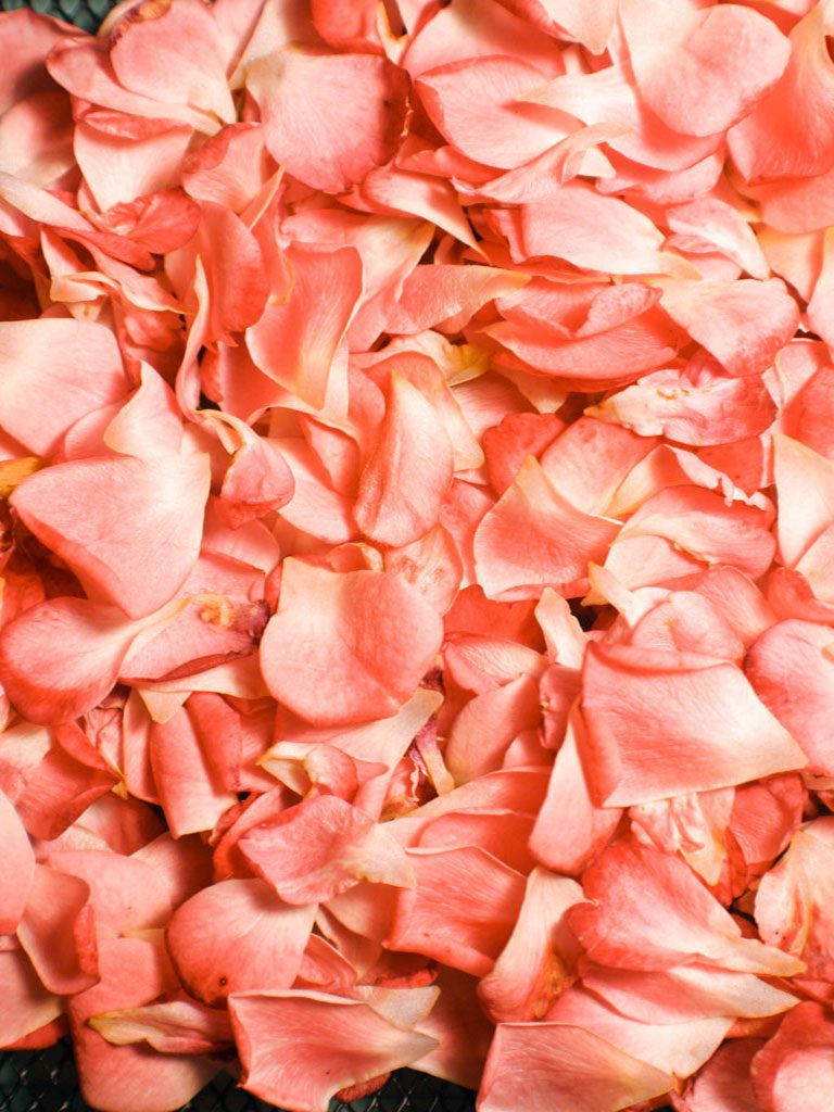 Colour of the year 2019 Living Coral Coloured Rose Petals